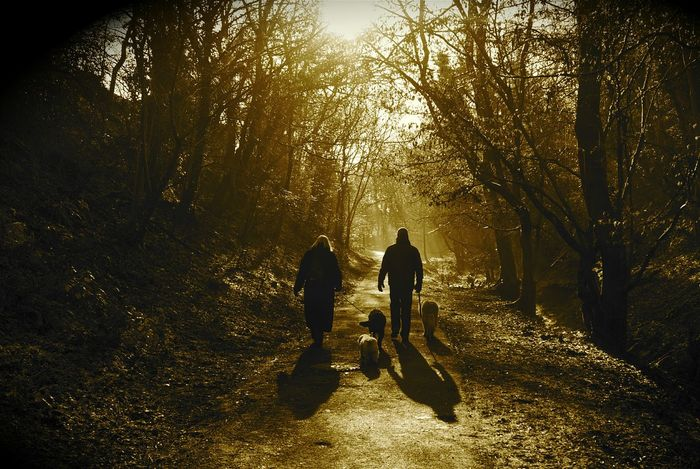 Dog Walking in the Woods 🐕🌲🌳 Two People Silhouette Shadow Sunlight Real People People Full Length Togetherness Outdoors Adult Day Adults Only Water Nature Walkers Pets Pet Care Tranquil Scene Couple Family Life Couple Life Relaxing Walk In The Woods Breathing Space Investing In Quality Of Life Paint The Town Yellow Second Acts Shades Of Winter