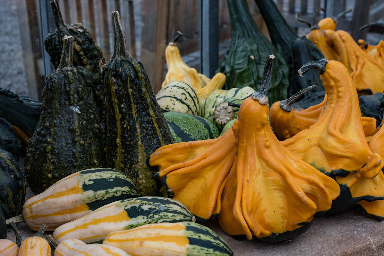 Close-Up Of Squashes On Retaining Wall At Tyntesfield