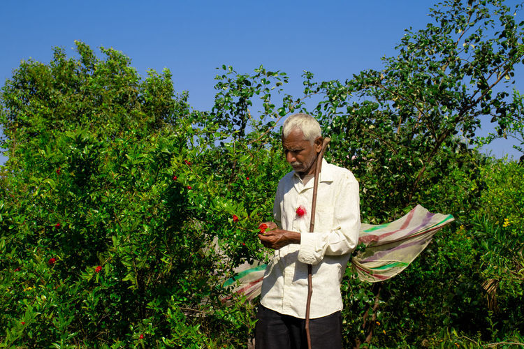 A farmer looking after red pomegranate flowers in a pomegranate garden. and holding a dry stick