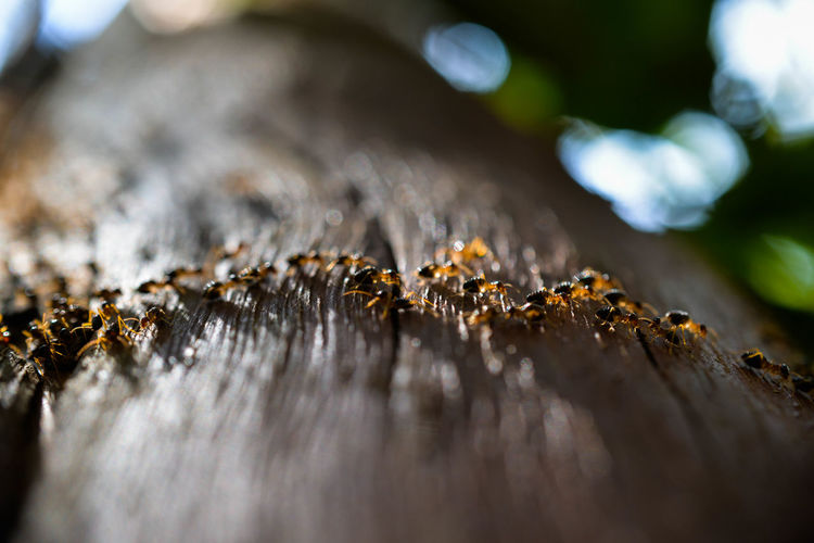 Ants Cambodia Beauty In Nature Close-up Day Extreme Close-up Food Freshness Growth Lichen Moss Nature No People Outdoors Plant Selective Focus Still Life Table Termites Textured  Tree Tree Trunk Wood - Material