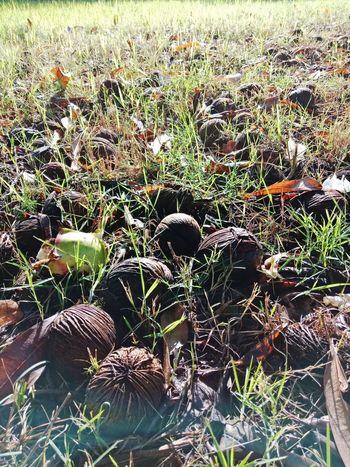 in the grass Field Close-up Grass Plant Blooming In Bloom Growing Flower Head Stem Fragility Spider Web Plant Life Cosmos Flower Dahlia Gazania Hibiscus Pollen Hydrangea Single Flower Petal Passion Flower Stamen Osteospermum