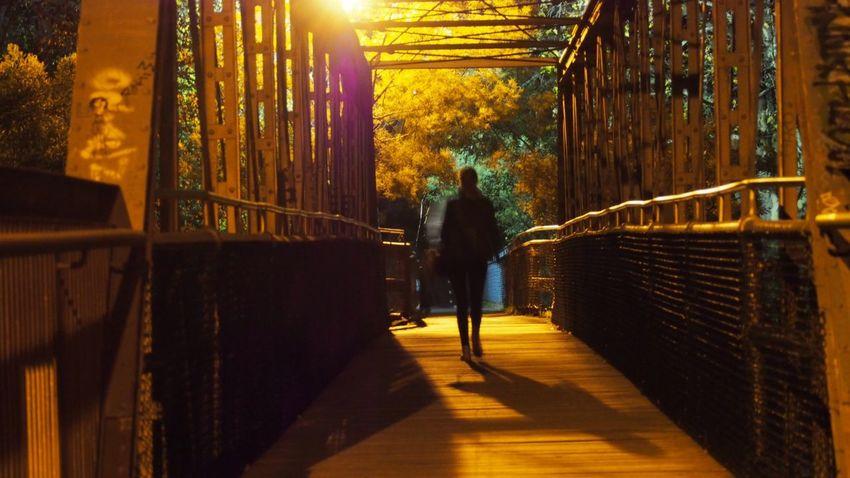 Yarra Bridge Night Walk