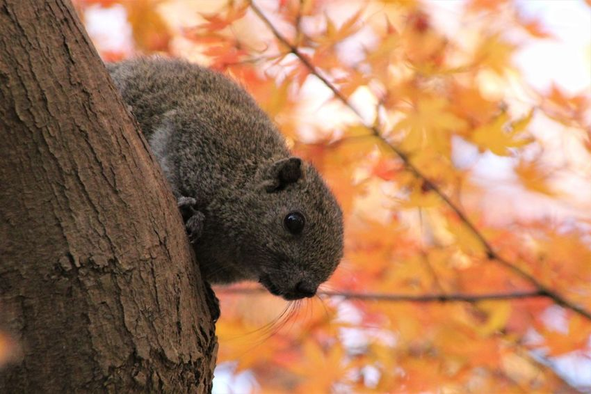 Japan Squirrel Animal Themes Animals In The Wild Beauty In Nature Close-up Nature One Animal Squirrel Tree