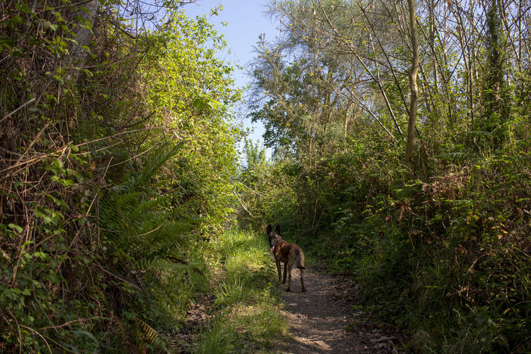 Horse walking on footpath in forest