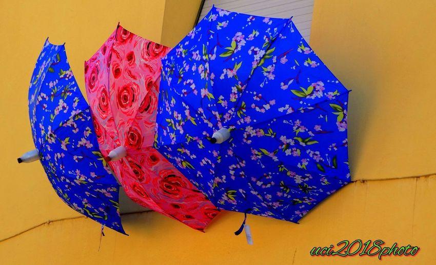 Buona giornata, in caso di pioggia usateli. Ombrellicolorati Blue Multi Colored Close-up