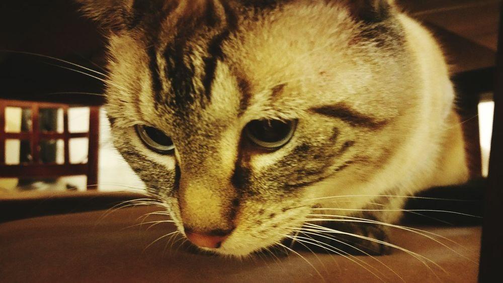 Cat Cats 🐱 Cat Lovers Catoftheday Cats Of EyeEm Kitty Cat Kitty Love Veterinary Visit