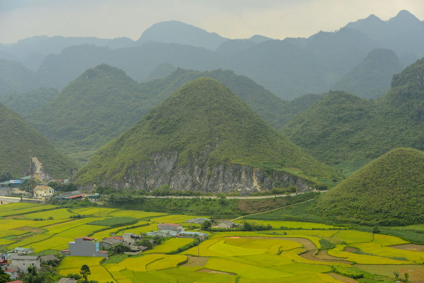 Beautiful View of Quan Ba town in Ha Giang district during cloudy and foggy morning. Witness of the twin mountain . The road is the gateway to the Dong Van Karst Plateau Geopark Quản Bạ World Heritage Site By UNESCO Unesco Landscape Geopark Town Paddy Fields Scenics - Nature Mountain Tranquil Scene Beauty In Nature Green Color Tranquility Environment Mountain Range Plant Nature Non-urban Scene Idyllic No People Day Tree Land Agriculture Sky Outdoors