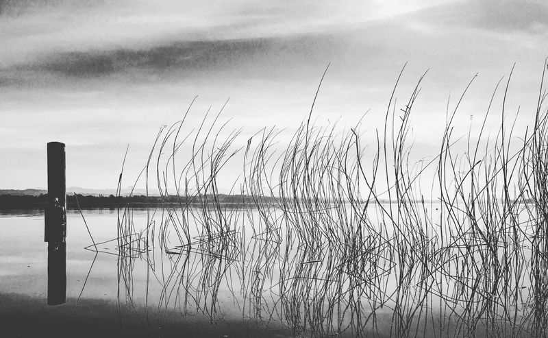 Greifensee See Beauty In Nature Nature Photography Blackandwhite Blackandwhite Photography Lake Day