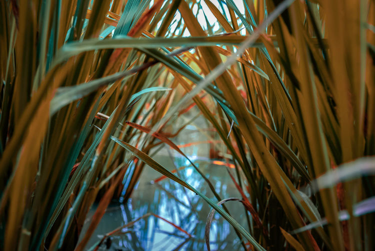 rice room #photography #EyeEmNewHere #NoFilter #indonesia_photography Palm Tree Tree Close-up Cereal Plant
