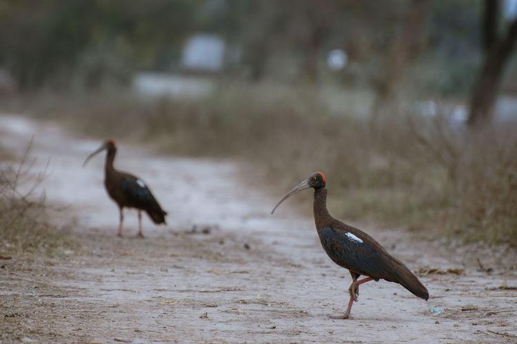 Bird Bird Themes Birds Birds_collection Day No People Outdoors