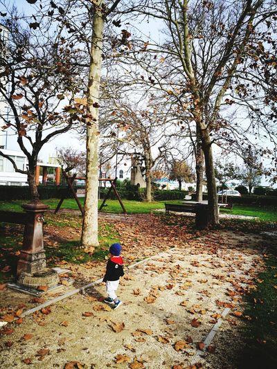 autunno ... Autumn Mood Tree Full Length Men Sitting Working Sky
