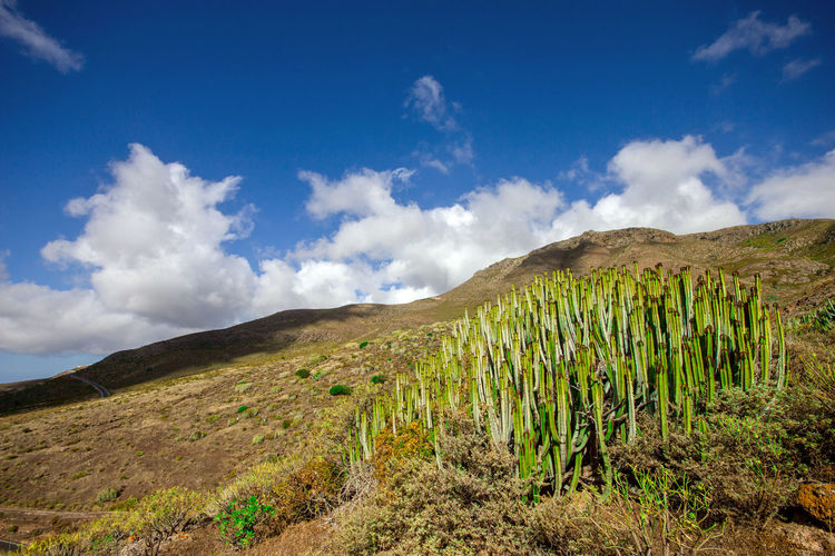 Canarias Canary Islands Gran Canaria Islas Canarias Beauty In Nature Blue Cloud - Sky Day Environment Green Color Land Landscape Mountain Nature Non-urban Scene Plant Scenics - Nature Sky Tranquility