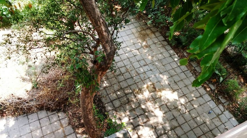 Backyard Grid Pattern Gridview Perspective Perspective Photography i miss my old home 😞