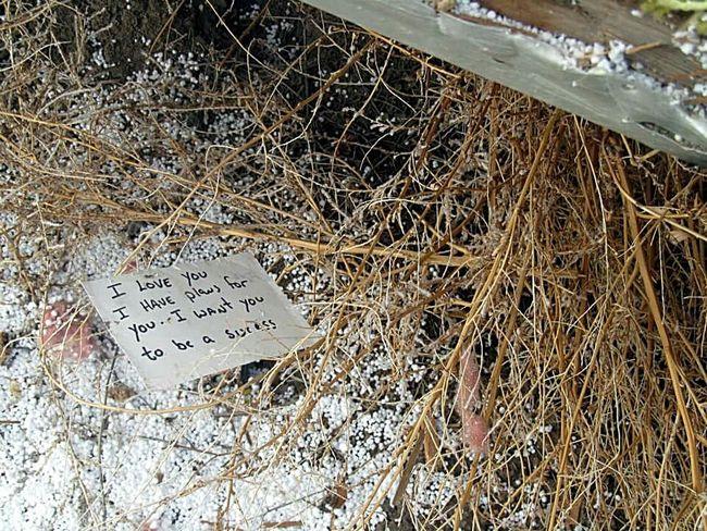 Note. Bush Note South Dakota Pine Ridge Love