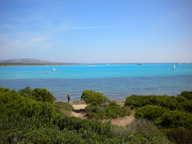 Asinara Blue Green Color Horizon Over Water Outdoors Sea Sky Tourist Tranquil Scene Tree Water Colour Of Life