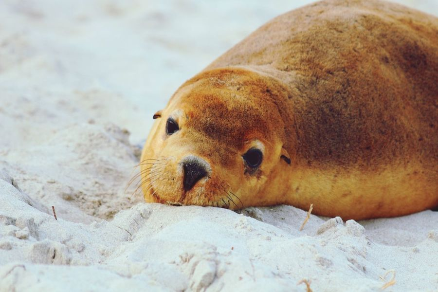 Nature On Your Doorstep Seal Lazy Lazy Seal