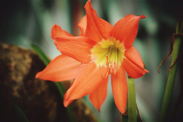 Orange Flower!