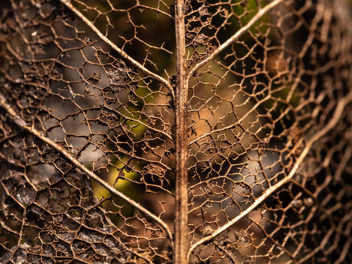 rottedt leaf EyeEm Nature Lover Selective Focus Close-up No People Vulnerability  Brown Color Rotted Complexity Outdoors Fragility Natural Pattern Beauty In Nature Dry Nature Pattern Full Frame Leaf Graphics