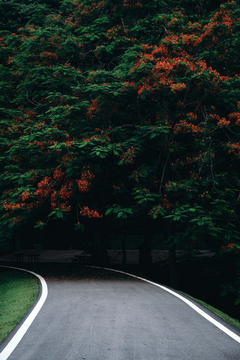 walkway in the park go inside the big tree shade. Nature Park  Big Tree Blooming Curve Curve Road Direction Dividing Line Empty Road Forest Green Leaves Greenery Nature Orange Flower Park Park Walking Plant Road The Way Forward Tranquility Tree Walkway Way