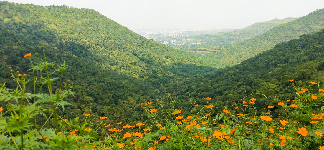 Scenic view of flowering plants growing on land