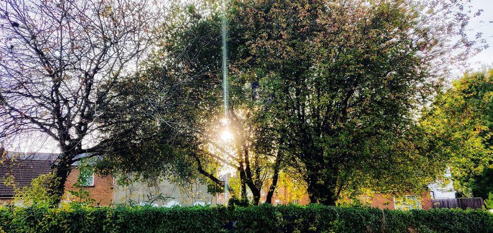 sunset in the shire Photowalktheworld Hampshire, UK Hampshirephotographer Country Side Landscape Way Of Life Oneplus6 Tree Sunlight Branch Sky Growing Plant Life Tree Trunk Countryside Country House