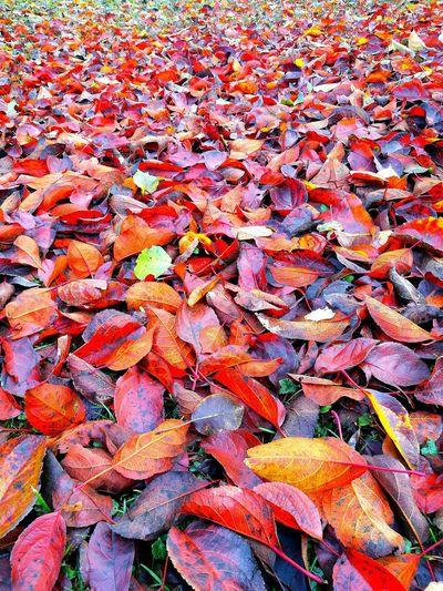 Leaves Leaves