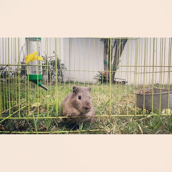 """Hi! I'm Trixie and this is my crib!""(? Trixie Guineapig Cribs RecuerdosDeMTV"