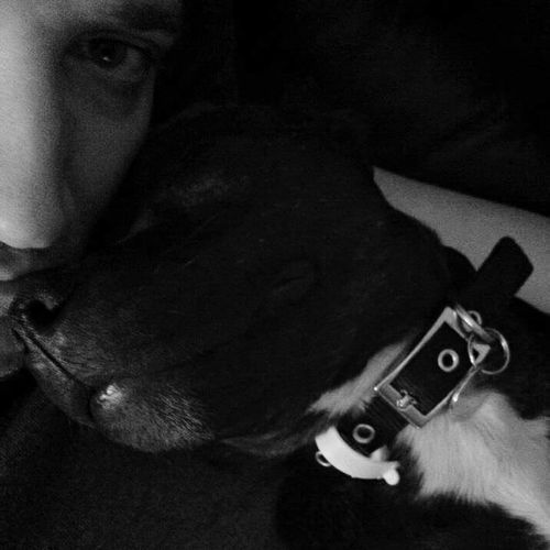 The dog and I. Staffordshire Bull Terrier Staffy Staffie Black And White