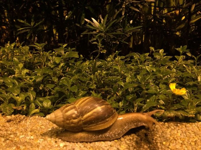 Snail in the City.