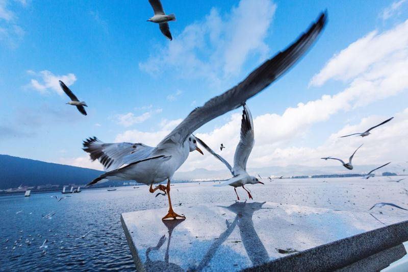 Seagulls flying over water against blue sky