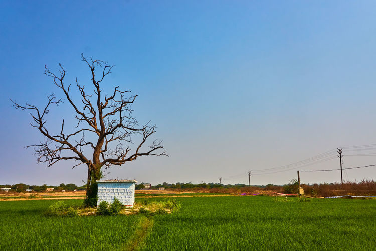 A Dried Tree against Green Agricultural fields and Clear Sky Village Photography Village Sony A6000 Sony Nwin Photography Landscape Landscape_Collection Landscape_photography Single Tree Patchwork Landscape Oilseed Rape Farmland Barbed Wire Poppy Razor Wire Barricade Countryside Agricultural Field Cultivated Land Fence