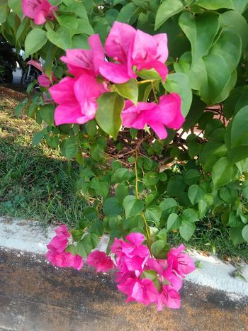 Flower Pink Color