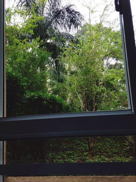 From my window Tree Window Nature My View My Home