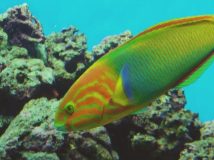 カラフルなお魚 Fish