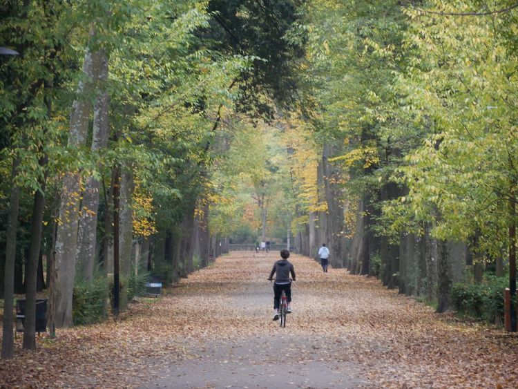 Tree Rear View Walking Full Length Footpath One Person Autumn Nature Day The Way Forward Outdoors Road Bicycle Forest Rural Scene Landscape Scenics One Woman Only Single Lane Road People