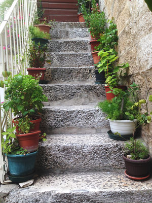 Potted plants in a row Botany Decor EyeEm Nature Lover Flora Flower Flower Pot Garden Garden Photography House House Plant Houseplant In A Row Leaf Narrow Nature Old Plant Plant Life Pot Plant Potted Plant Staircase Stairs Stairway Steps Succulent Plant