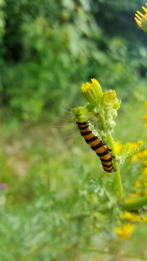 Insect Animals In The Wild Animal Wildlife Animal Themes One Animal Nature Green Color Focus On Foreground No People Day Outdoors Plant Close-up Leaf Beauty In Nature Catapiller