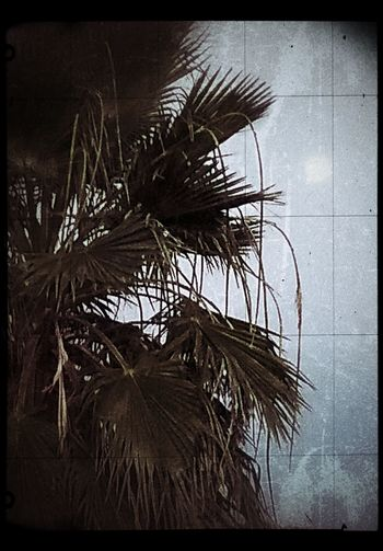 Auto Post Production Filter Beauty In Nature Close-up Day Growth Leaf Low Angle View Nature No People Outdoors Palm Leaf Palm Tree Plant Plant Part Sky Tranquility Transfer Print Tree Tropical Climate Water