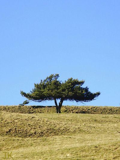 Freundschaft ist wie ein Baum. Es kommt nicht drauf an wie hoch er ist, sondern wie tief seine Wurzeln sind. First Eyeem Photo