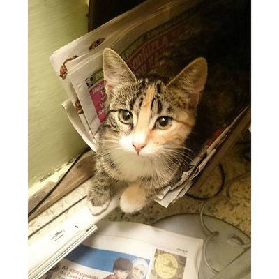Cat Kitty Home Pet Animals Love Kitten