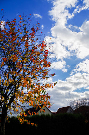 Autumn Beauty In Nature Cloud - Sky Day Freshness Growth Nature No People Outdoors Scenics Sky Tree
