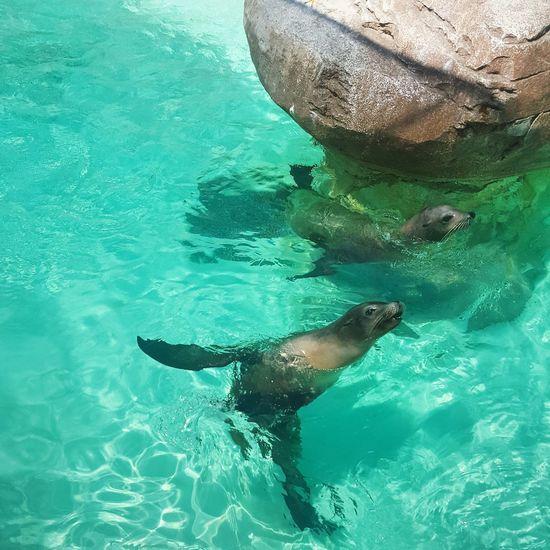 First Eyeem Photo Sealion  California Seaworld San Diego Animal Themes Zoo Zoophotography Tourism Tourist Attraction  Travel Naturephotography
