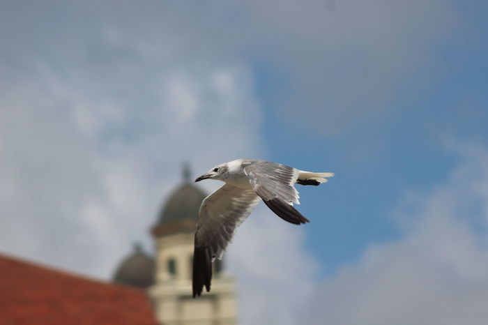 My favorite seagull photo today. For you AnnetteAnimal Themes Animals In The Wild Bird Blurredbackground Close-up Cloud - Sky Eyemphoto Eyemphotography Eyemphotos Flight Flying Low Angle View Nature One Animal Popular Photos Seagull Sky Spread Wings Wildlife My Favorite Place