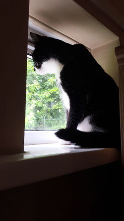 My Fur Baby Felix The Cat Taking In The View My Cat Is Cooler Than Your Kids! Felix ❤️ I Love My Cat ❤
