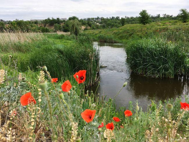 Plant Flower Water