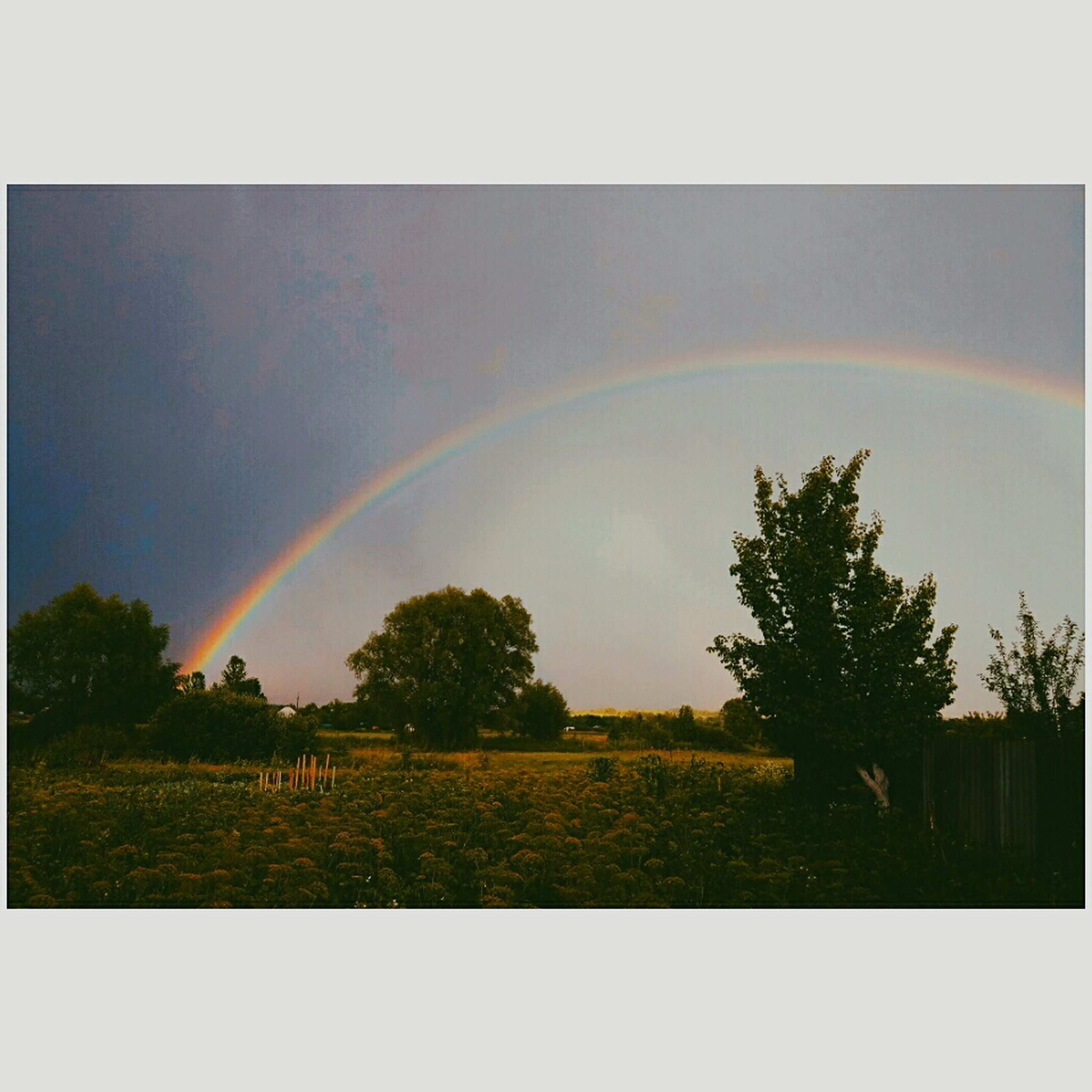 rainbow, double rainbow, scenics, no people, tree, beauty in nature, day, tranquility, idyllic, tranquil scene, outdoors, nature, multi colored, spectrum, architecture, sky
