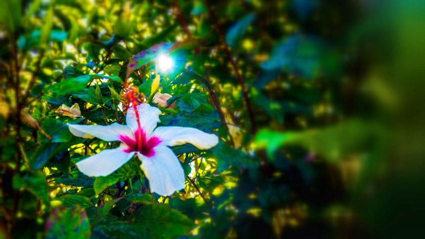 Flowerpower Nature Nice Atmosphere Beautiful Surroundings Relaxing