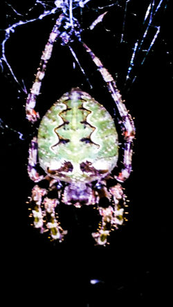 Spider Design Designs In Nature Green Color Spider Web Spider Collection Spider Hunting Spider Waiting Spider Silk Insects  Insect Photography Insects At Night Macro Macro_collection Macro Photography Up Close Night Night Animal Night Photography Showcase July Nature Animals Overnight Success