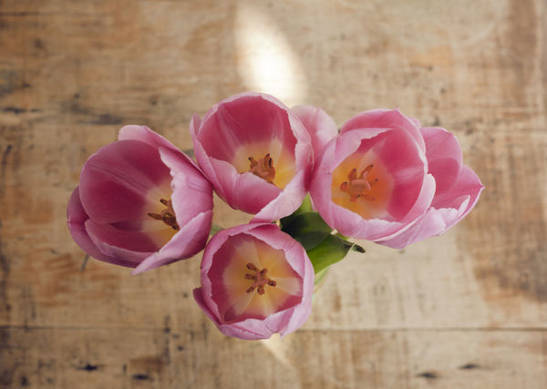 The Five Senses Flowerslovers In The Details Pink Tulips