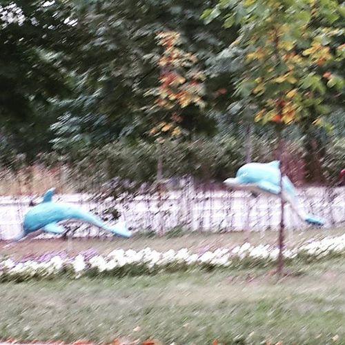 і тут зненацька пара блакитних дельфінів посеред зеленого газону НаркоманЧиШо